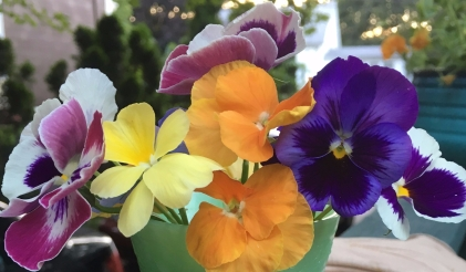 This little parfait cup is a junk store find. It makes a pretty vase.